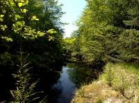 13.9 Acre Riverfront Property, Haida Gwaii (Queen Charlotte Islands)